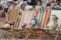 sunbathing pooh piglett eeyore and tigger